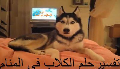 تفسير حلم الكلب في المنام وجميع انواع الكلاب ودلائلها