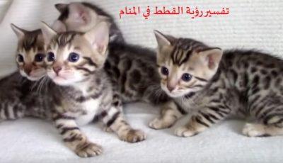 تفسير رؤية القطط في المنام ودلائل القطط والونها وانوعها