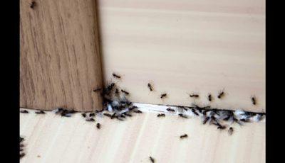 تفسير رؤية النمل على الحائط في المنام للعزباء والمتزوجة لأشهر المفسرين