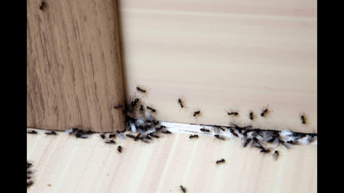 تفسير رؤية النمل على الحائط في المنام