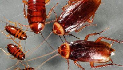 تفسير رؤية الحشرات في المنام الطائرة والصغيرة للعزباء والحامل والمتزوجة
